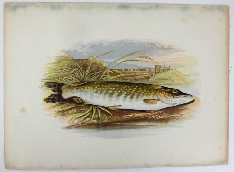 The British Fresh-Water Fishes. [Illustrated with a coloured figure of each species, drawn from nature by A.F. Lyon] Plates only. W. HOUGHTON.